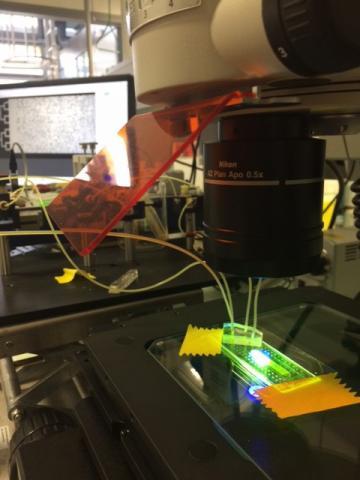 Dispositif microfluide pour visualiser les phénomènes physiques à l'échelle des pores